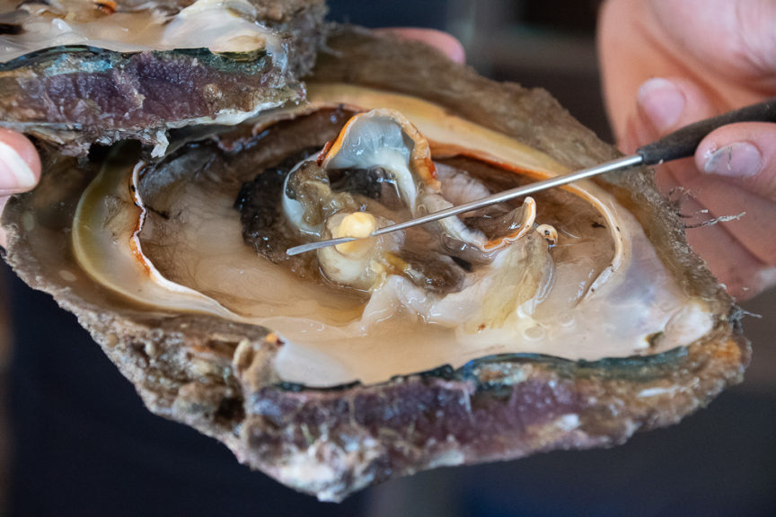 Pearl Oyster lessons