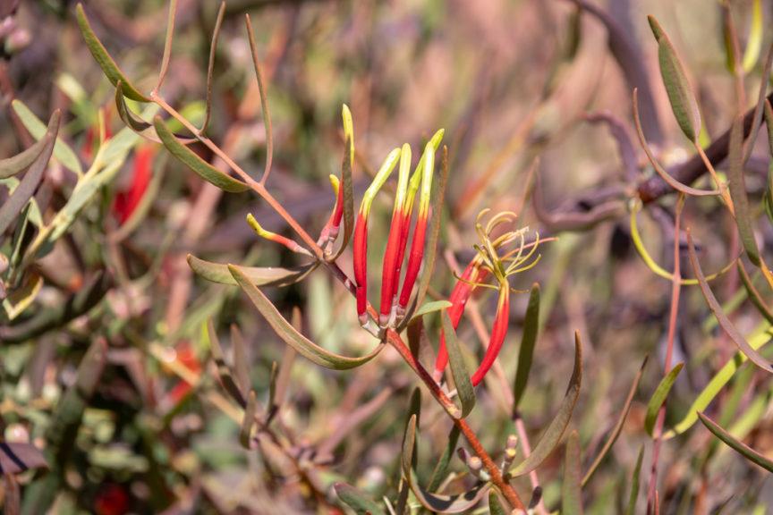Beautiful native flowers