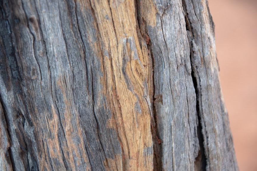 Beautiful bark colours
