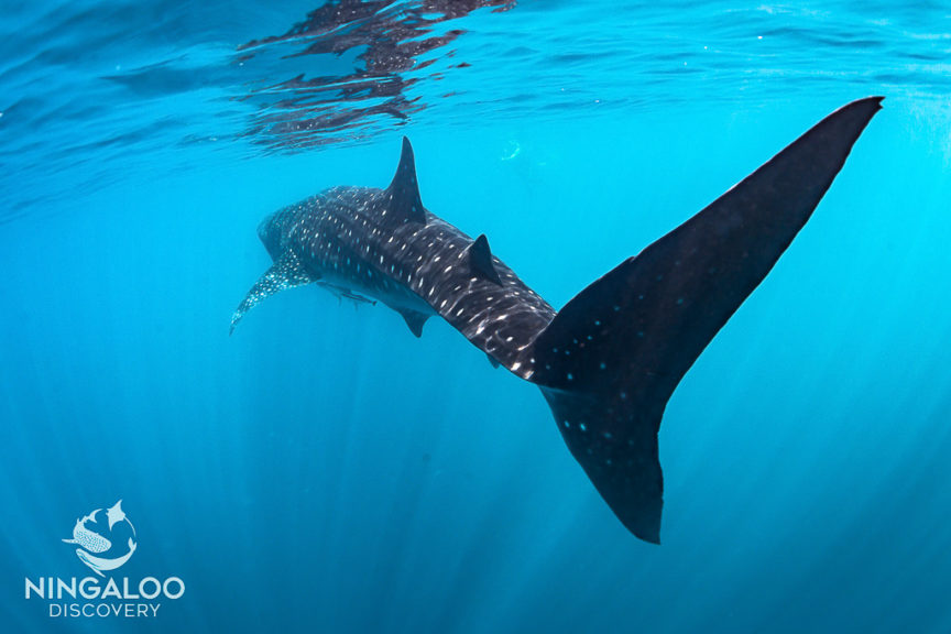 We swam with this beautiful creature