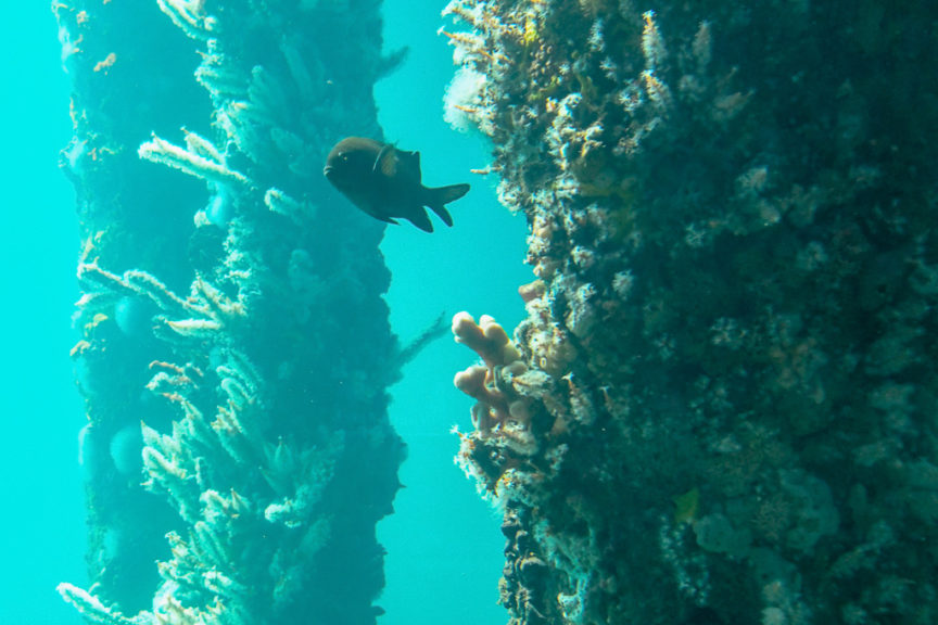 Busselton Jetty Aquarium