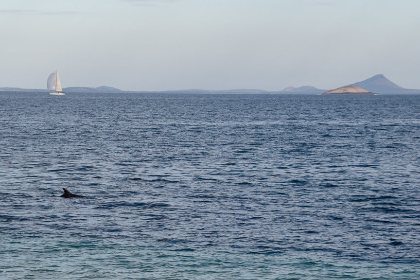 Esperance Beach - with dolphin