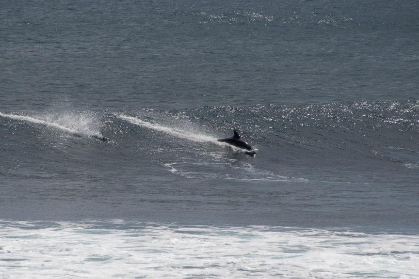 Yallingup dolphins