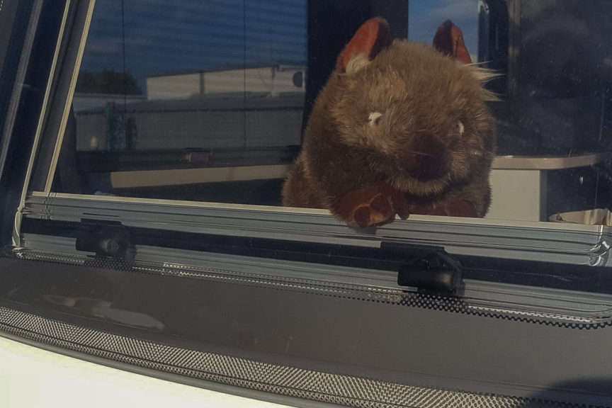 New Wally the Wombat