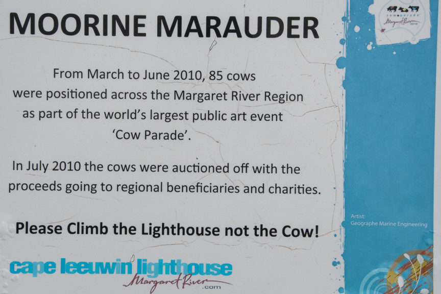 About Lighthouse cow